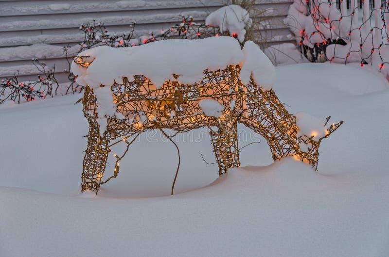 Lit de cerfs communs avec les lumières minuscules pour les vacances images libres de droits