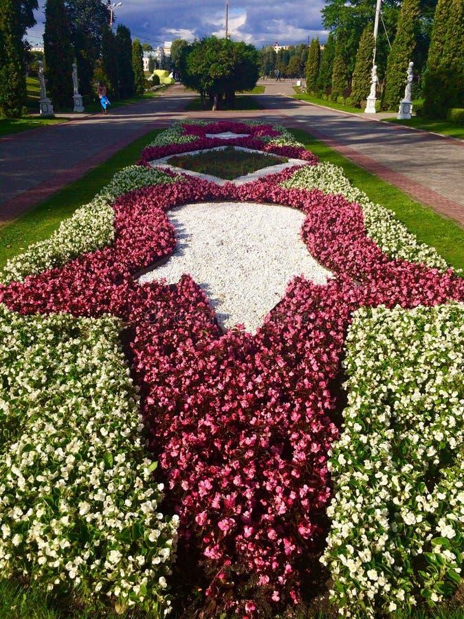 Lit de fleur avec des fleurs sous forme d'étoile photos libres de droits