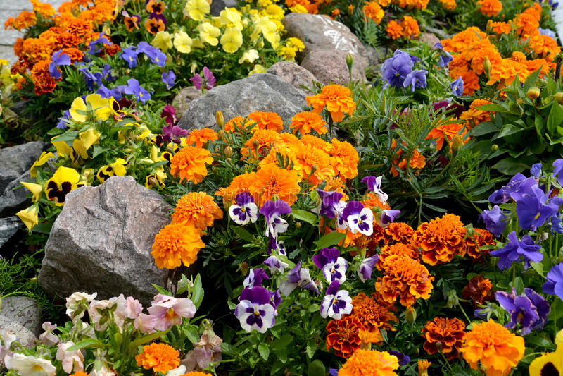 Lit de fleur décoratif avec des pierres aménagement image libre de droits