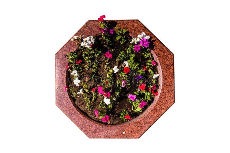 Lit de fleur décoratif de granit avec les fleurs multicolores images libres de droits