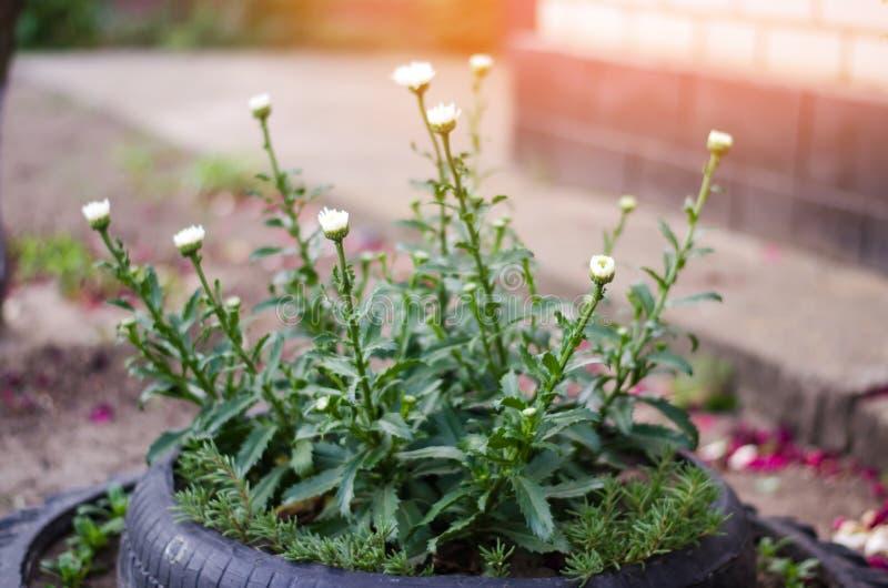 Lit de fleur peu commun dans le jardin Un lit de fleur hors de vieux pneus de voiture conception de parterre Ressort, été, jardin photos libres de droits