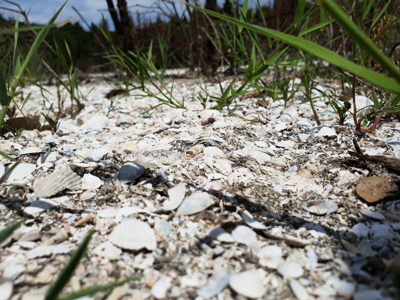 Lit de lac sec de sel avec la végétation images stock