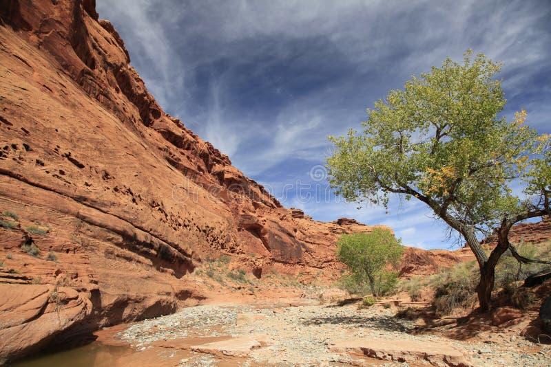 Lit de rivière sec dans le pays rouge de roche, Utah photographie stock libre de droits