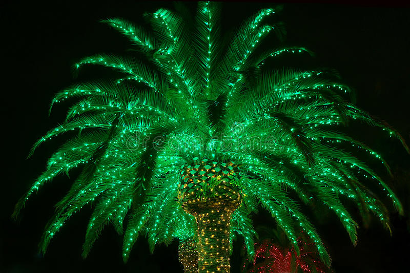 Lit Outdoor Christmas Palm Tree royalty free stock image
