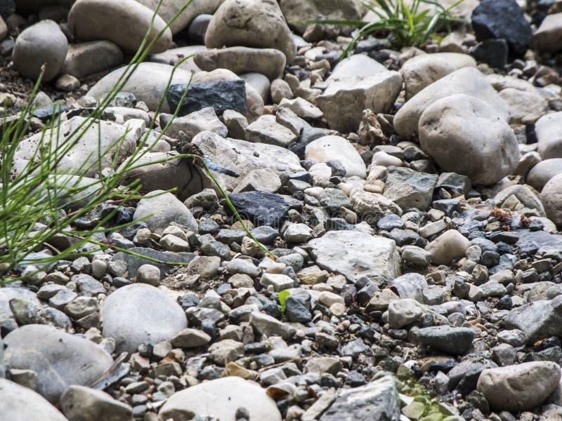 Lit sec de rivière avec des libellules sur des pierres photos libres de droits