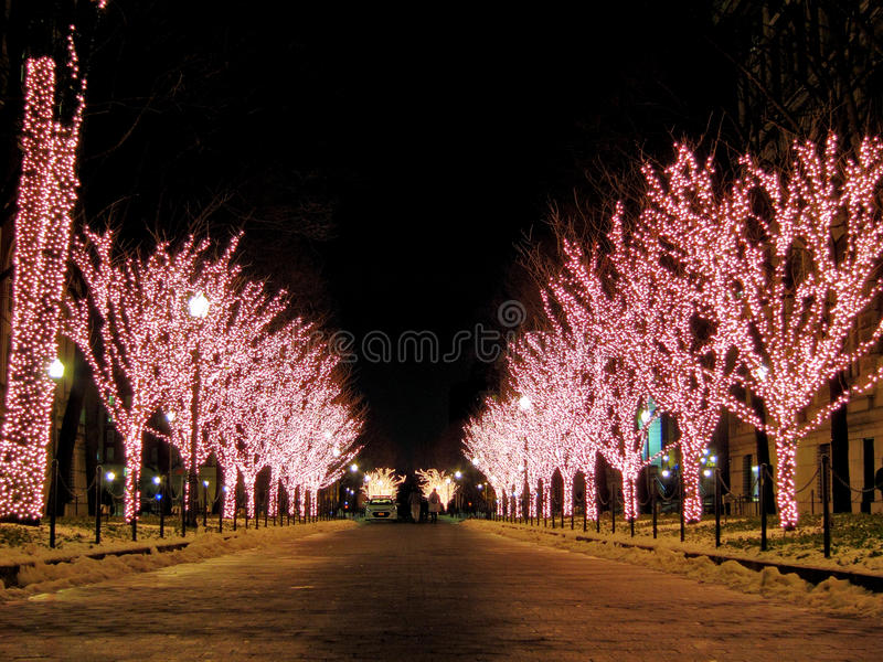 Lit Up Christmas Trees. A row of Lit Up Christmas trees covered with pink and white led bulbs stock photography