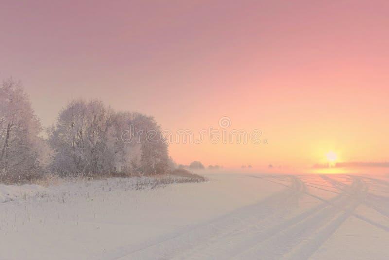 Litauen landskap ovanför för sunsolnedgång för ljus päls röda överkanter övervintrar trees royaltyfri fotografi
