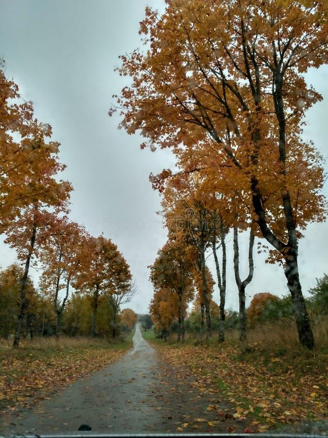 Litauiskt landskap arkivfoton