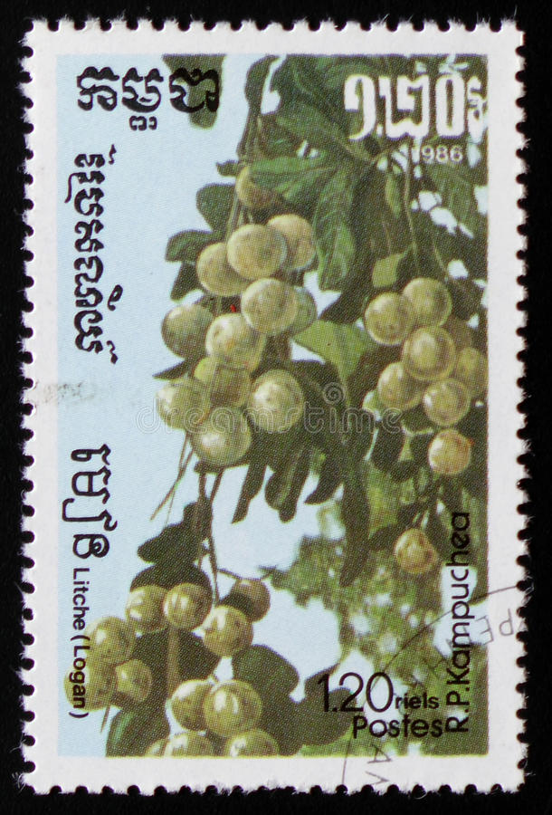 Litchea a series of images `Exotic fruits` circa 1986. MOSCOW, RUSSIA - FEBRUARY 19, 2017: A stamp printed in Kampuchea shows Litchea a series of images `Exotic stock image