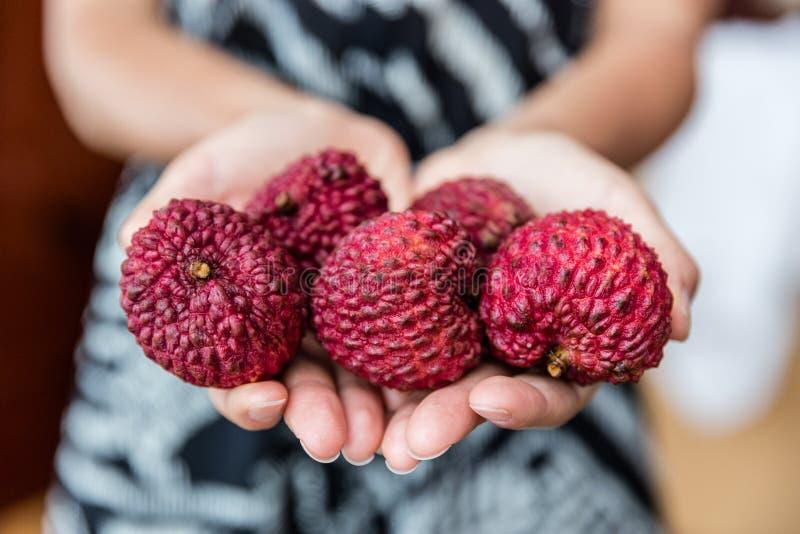Litchiplommonfruktcloseupen av händer som rymmer asiatet, bär frukt royaltyfria foton