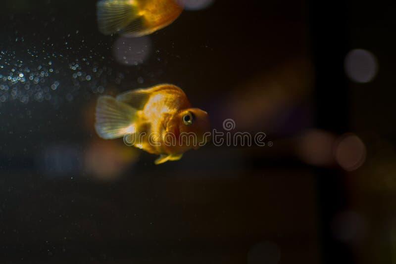 Lite bara fisk royaltyfri bild