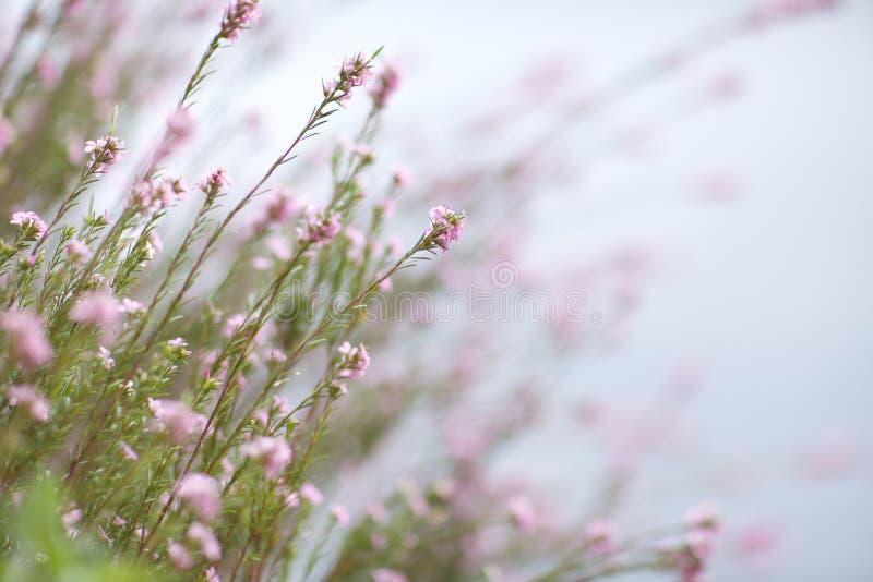 Lite blommar rosa färg 06b arkivbilder