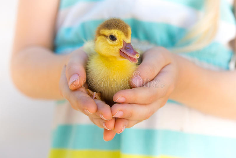 Lite duckling royaltyfri bild