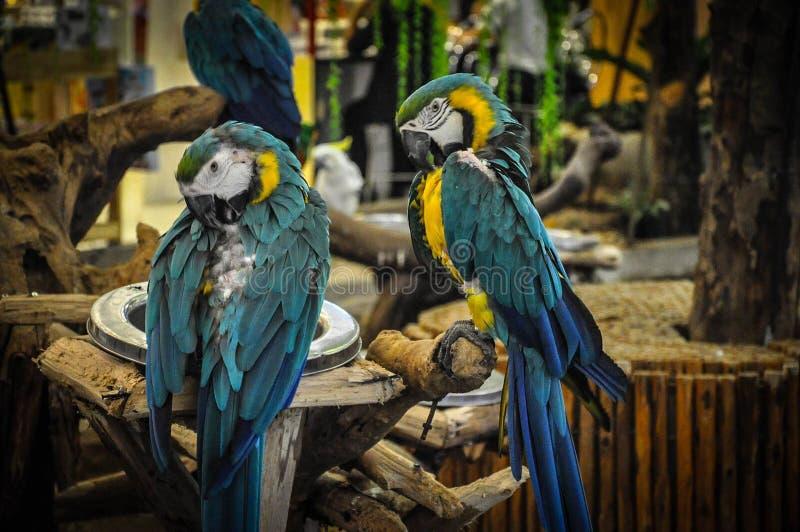 Lite fågel royaltyfria bilder
