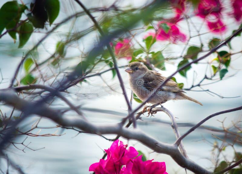Lite fågel royaltyfri fotografi