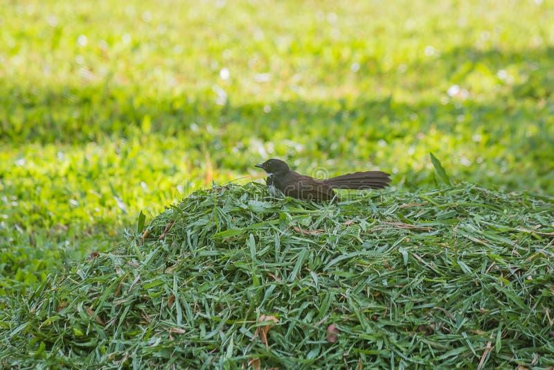 Lite fågel fotografering för bildbyråer