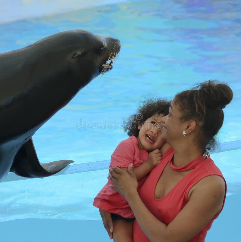 Lite flicka som är rädd av en vänlig sjölejon på Delphinario, Sono arkivfoto