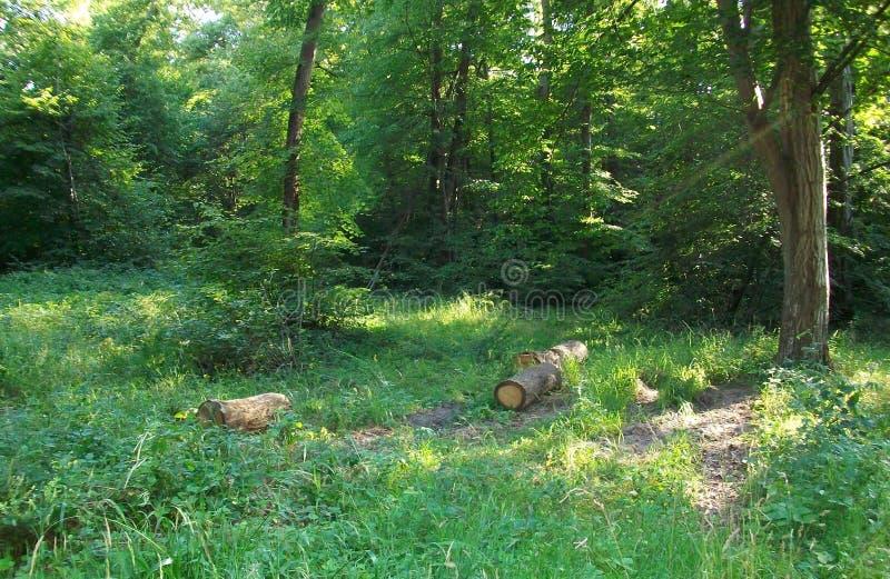 Lite franskt trä arkivfoton