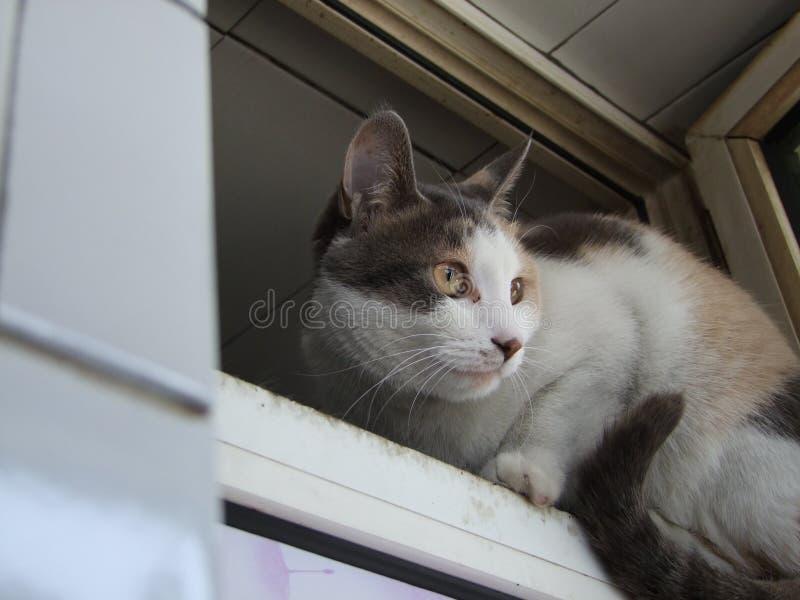 Lite gul svart vit katt fotografering för bildbyråer