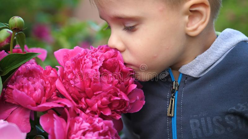 Lite gulligt behandla som ett barn tycker om försiktigt lukten av blommor Barnet väljer upp en blomma och inhalerar dess doft _ arkivbild