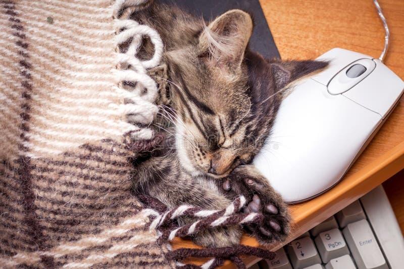 Lite kattunge som sover nära datoren som sätter på hans huvud royaltyfria foton