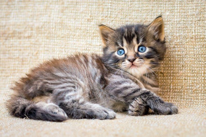 Lite ligger den randiga kattungen vila efter game_en royaltyfria foton