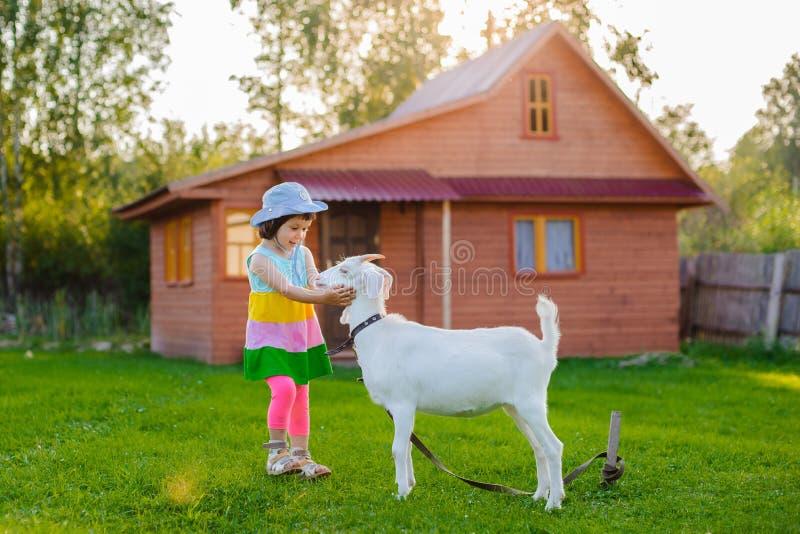 Lite matar flickan en get på gräsmattan per solig sommar, i ett land i Ryssland arkivfoton