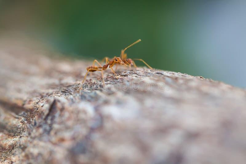 Lite myra arkivfoto