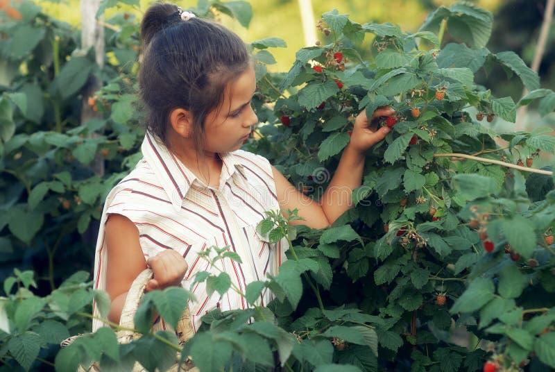 Lite samlar flickan hallon i trädgården arkivbilder