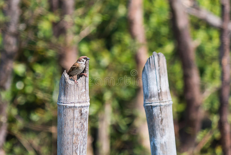 Lite sparrow arkivbild