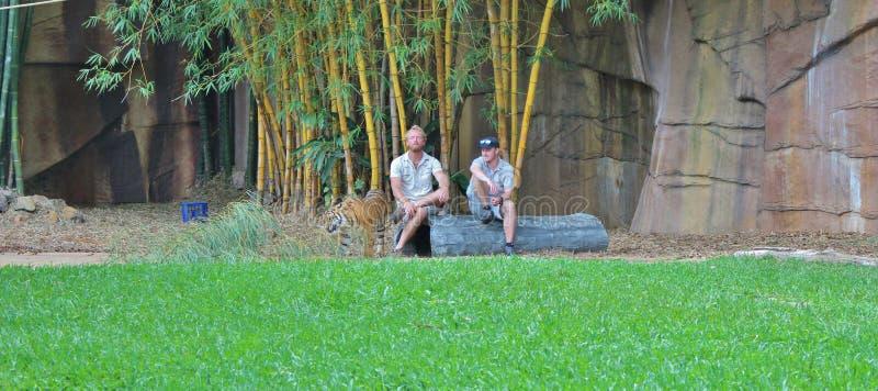 Lite tiger tillsammans med två djura vårdare royaltyfri foto