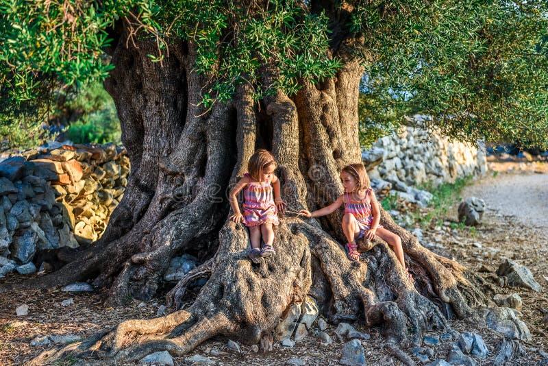 Lite tvilling- flickor sitter och den forntida gamla olivträdet royaltyfri fotografi
