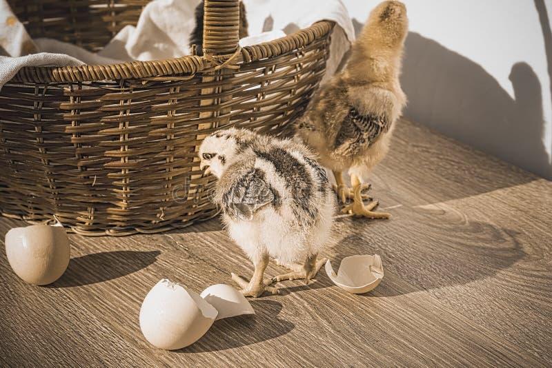 Liten äggskalstunn och vide- korg för fågelungar, på tabellen, tappning fotografering för bildbyråer