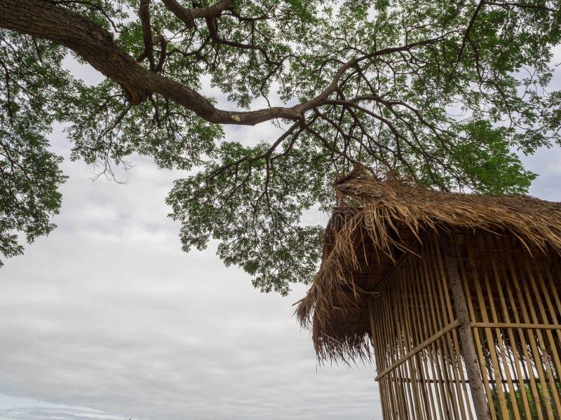 Liten bambu som förlägga i barack under trädet royaltyfri foto