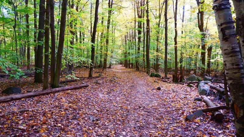 Liten bana i skogen royaltyfri fotografi