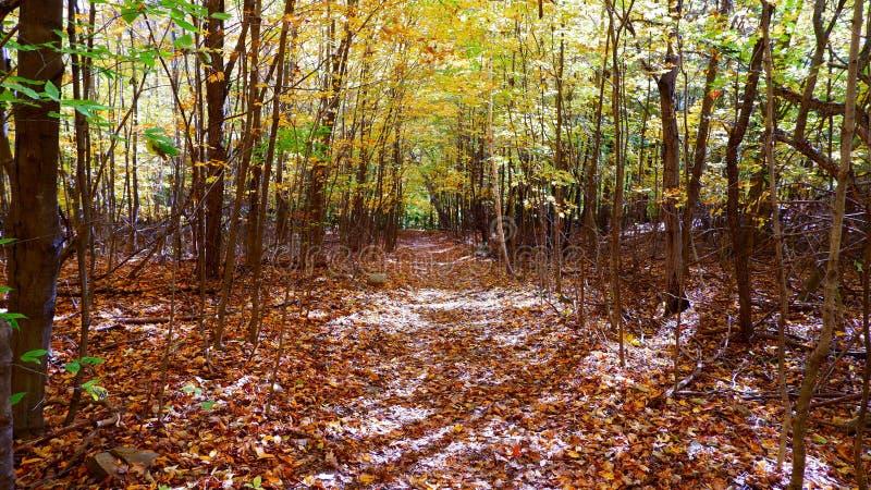 Liten bana i skogen arkivfoto