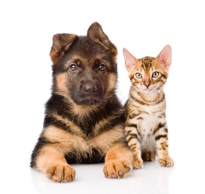 Liten bengal katt och valphund för tysk herde som tillsammans ligger arkivfoton