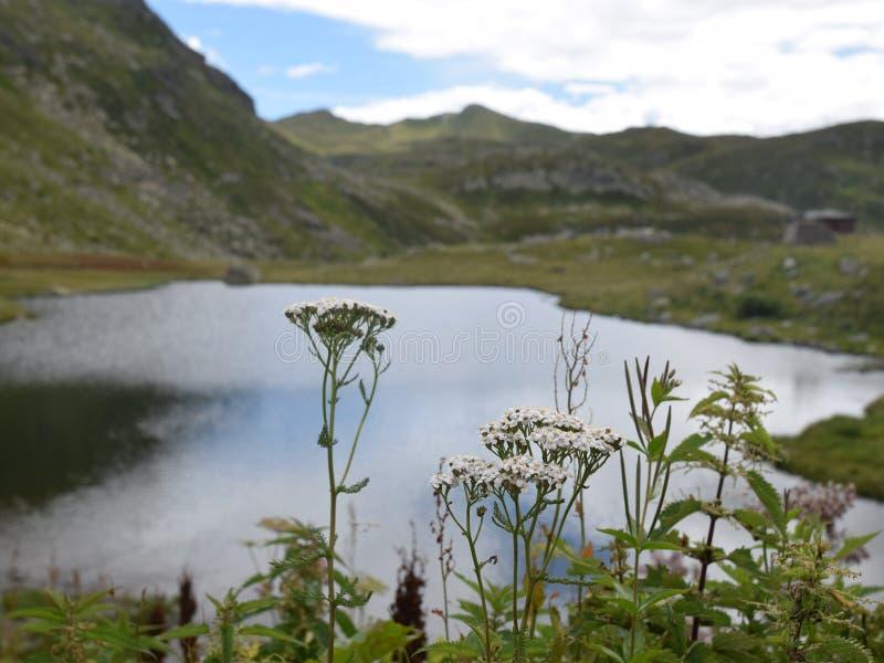 Liten bergsjö, grönt planterat berglandskap arkivbilder
