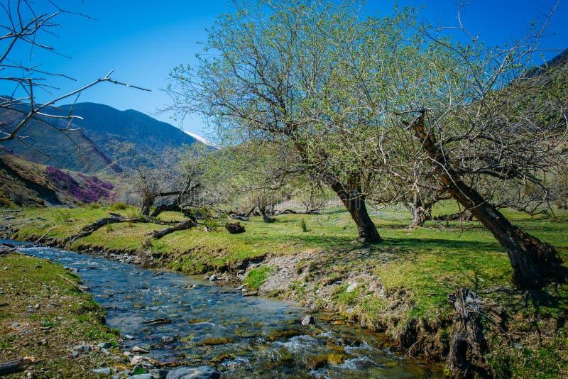 Liten bergström bland de blomma kullarna och bergen som täckas med gamla träd för skog på flodens kust royaltyfria foton