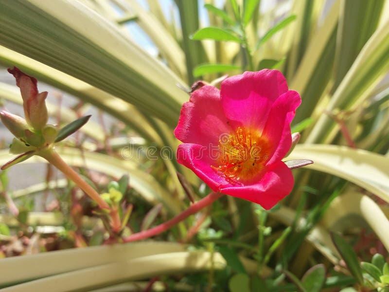 Liten blomma arkivfoto
