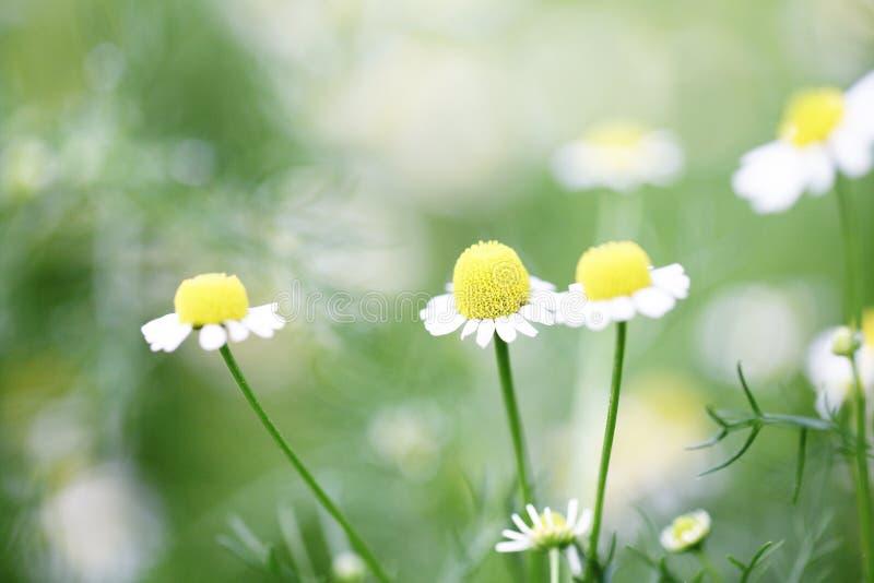 Liten blomma fotografering för bildbyråer