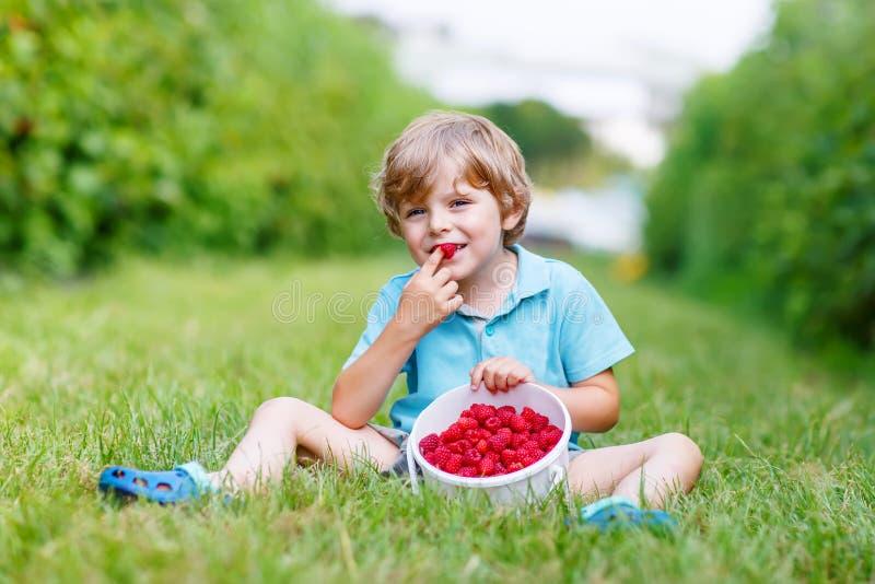 Liten blond pojke som är lycklig om hans skörd på hallonlantgård arkivfoto