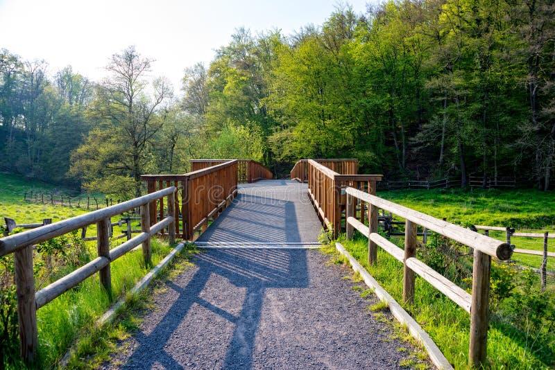 liten bro i skogen arkivfoto
