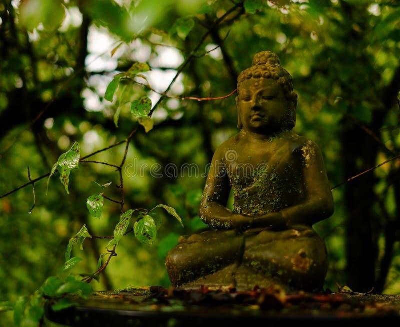 Liten Buddha bland träden royaltyfri fotografi
