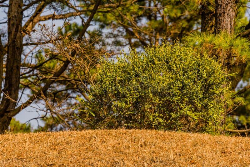 Liten buske med härliga gröna tjänstledigheter royaltyfri foto