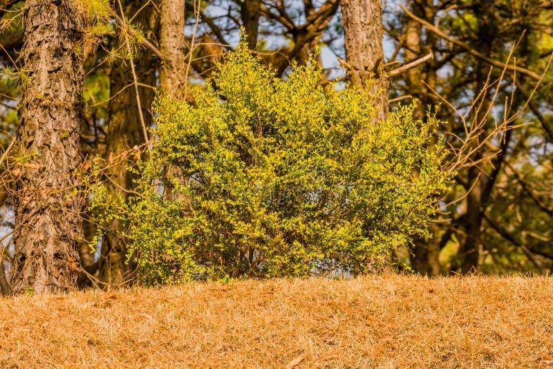Liten buske med härliga gröna tjänstledigheter arkivfoto