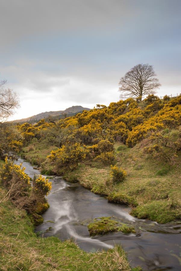 Liten Dartmoor ström arkivfoto