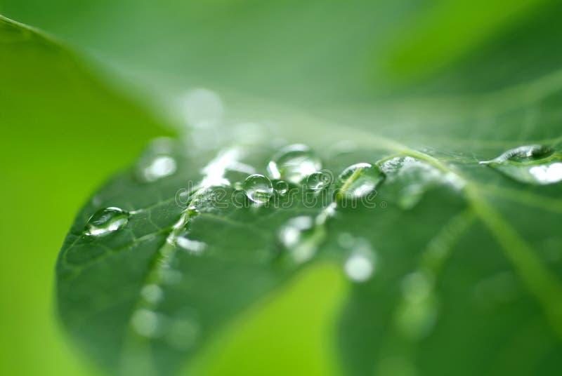 liten droppeleavevatten fotografering för bildbyråer