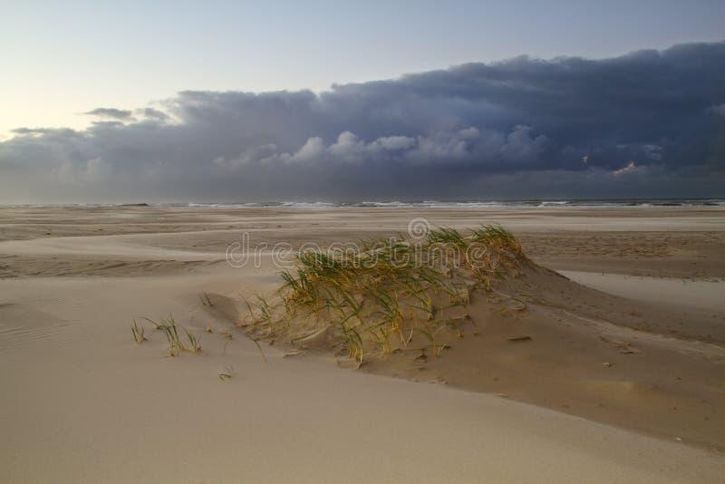 Liten dyn på den blåsiga stranden arkivfoto