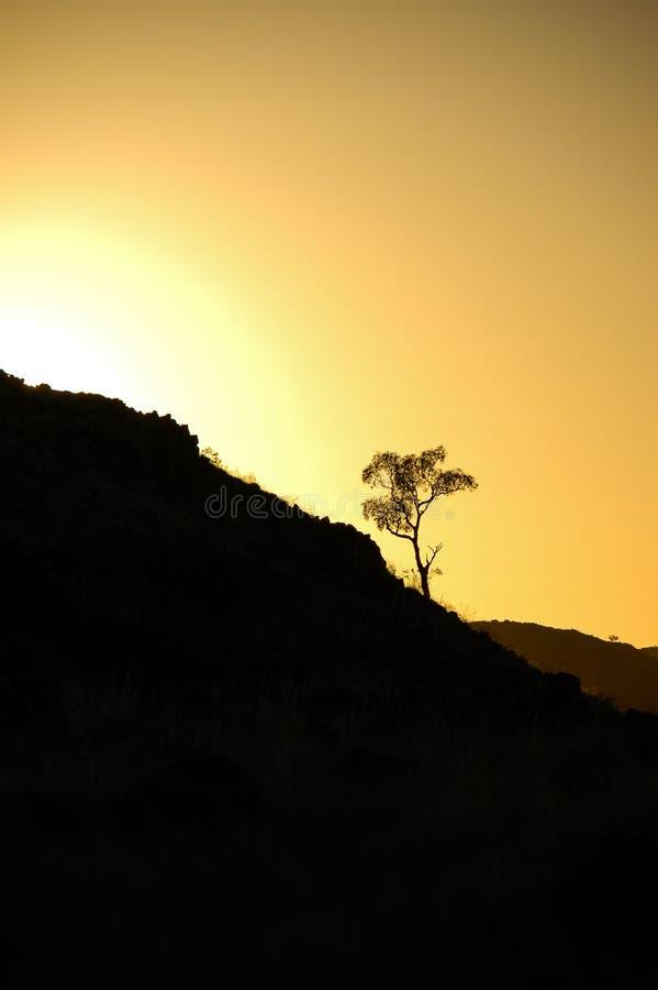 Liten eukalyptusträd i kontur vid guld- morgonsollöneförhöjning i vildmark Australien arkivbilder